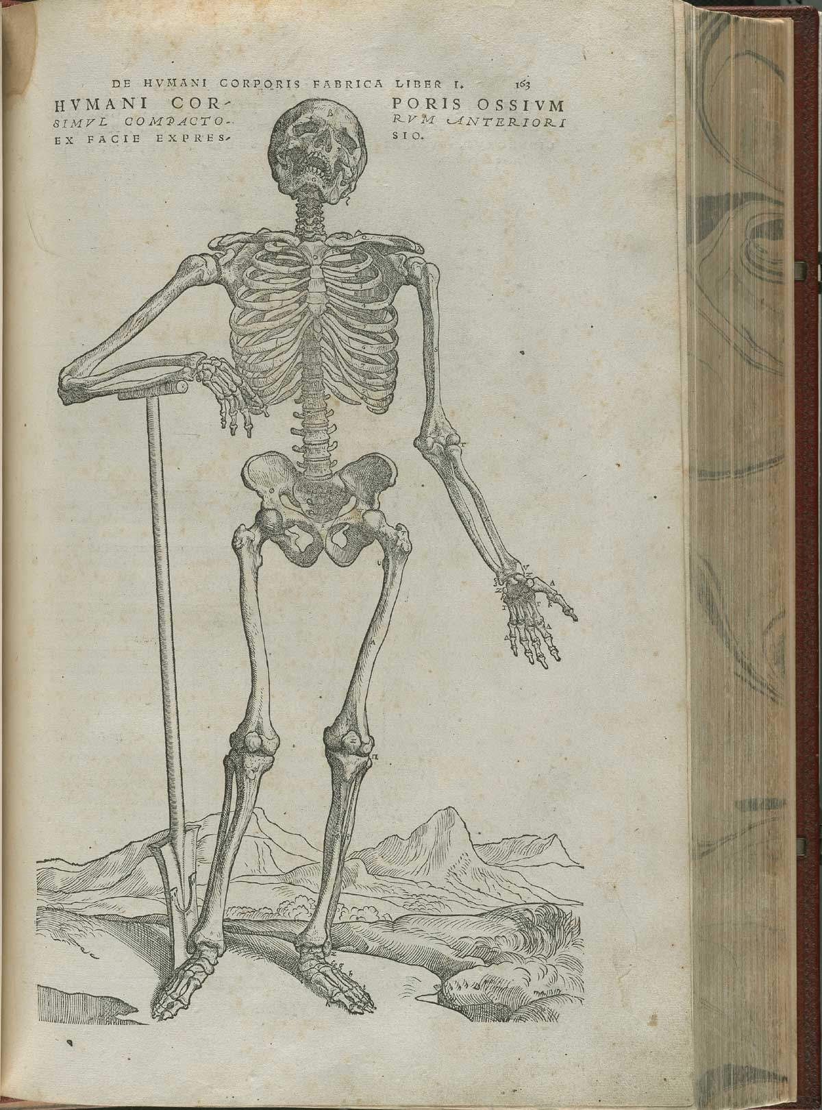 Vesalius. De humani corporis fabrica. p163